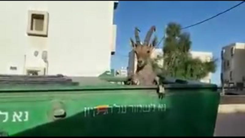 Коты Мицпе Рамона
