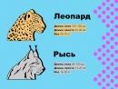 Леопард и Рысь