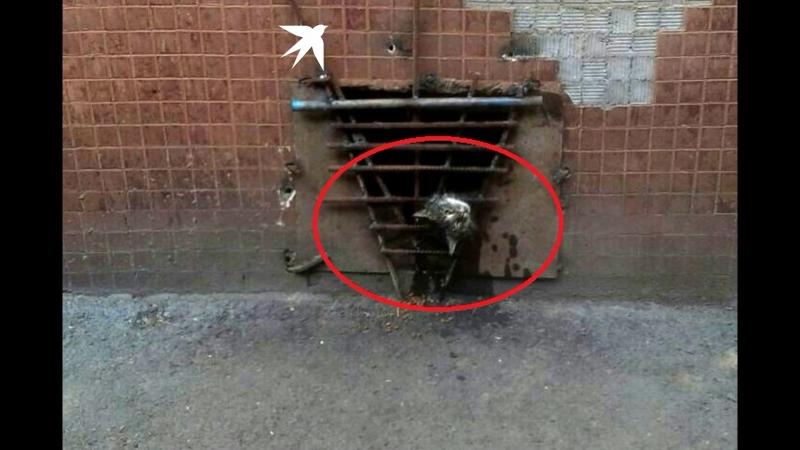 В Новосибирске спасли из замурованного подвала кота