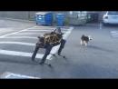 Fido vs Spot Animal vs Robot