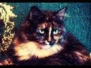 Смешная Кошка Марфа 03 СеменАлиса