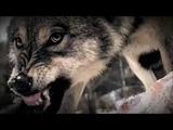 Евгений Алтайский Охота на волка