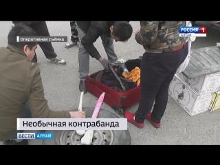 В Алтайский край пытались ввезти сушёные головы пеликанов для магических ритуалов