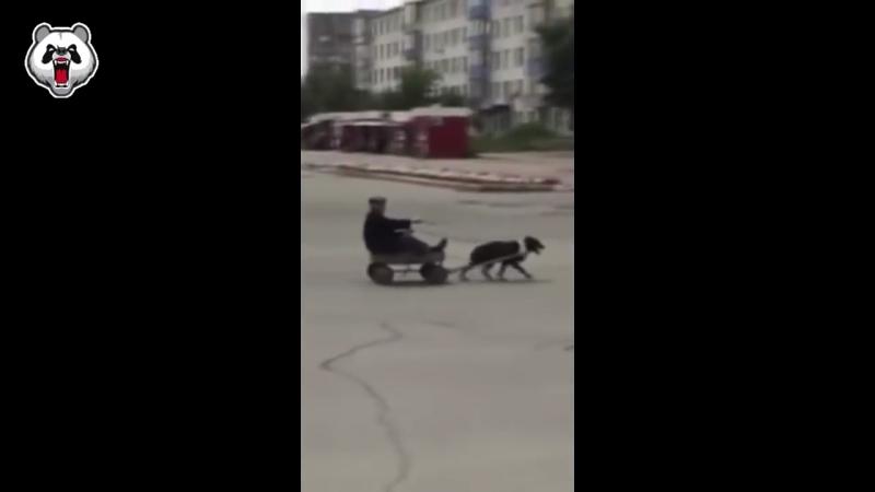 на собаке по городу