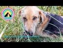 Выстрел в упор заключение ветеринаров Нет половины морды у собаки Помогите спасти Грома Help the dog
