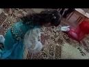 Волшебный мир С Захрямин кавер из мультфильма Аладдин