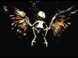 Owl Time - Lapse Decomposition Test