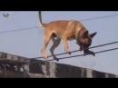 Les nouveaux chiens pour la garde des frontières