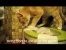 кот насрал