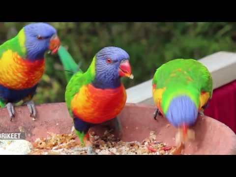 BIRD AVIARY PARK ISLAMABAD