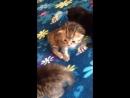 мои зайки кстати кому нужны котята-отдам даром,в хорошие руки