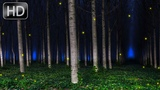 Noise of night forest, birds Singing, Cicadas. Nature sounds for sleeping and relaxing 10 Hours