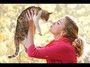 Смешные коты, приколы, жизнь кошек. Забавные кошки