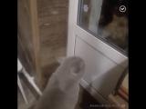 Кот, открой дверь