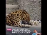 кошки. зоопарк