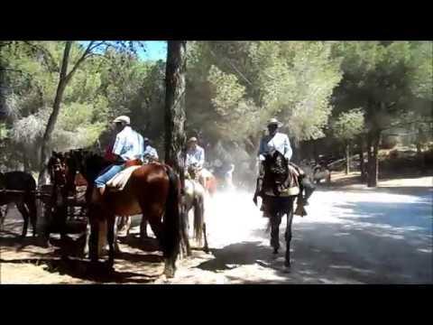 CABALLOS en ROMERIA SAN JUAN 2018 ALHAURIN de la TORRE, bosque de pinos, 10/06