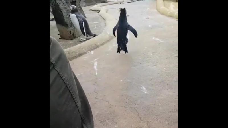 Танцующий пингвин » Freewka.com - Смотреть онлайн в хорощем качестве