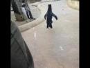 Танцующий пингвин