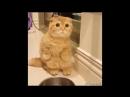 Кошки не похожи на людей Кошки - это кошки