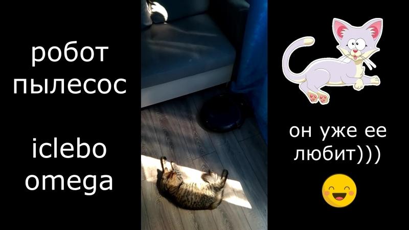 робот пылесос и кот