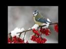 видео про зиму