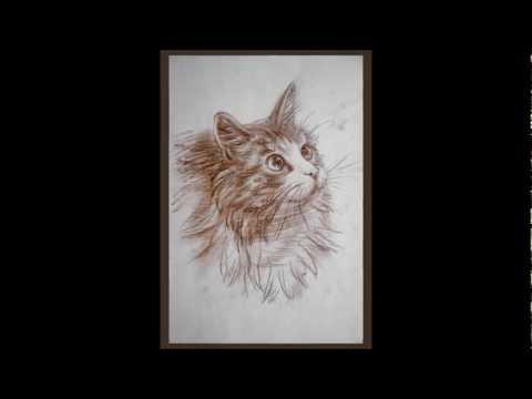 Как научиться рисовать кошку. How to lean to draw a cat.wmv