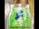 Декоративный аквариум в банке