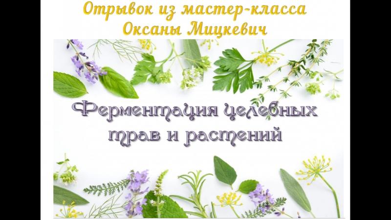 Ферментация целебных трав и растений отрывок из мастер класса Оксаны Мицкевич смотреть онлайн без регистрации