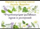 Ферментация целебных трав и растений отрывок из мастер класса Оксаны Мицкевич