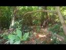15.03.18, Raya Island, Big Varan