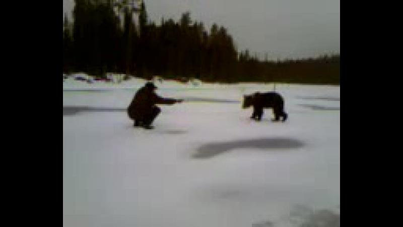 Озеро Пяозеро медведь