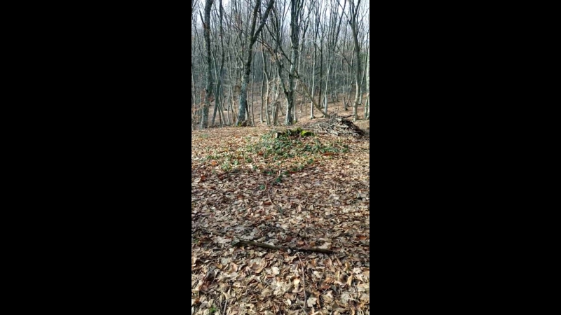 Лес на склоне Чатыр -Дага. Зима. 9 декабря