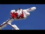 Снежный ноктюрн. Ричард Клайдерман