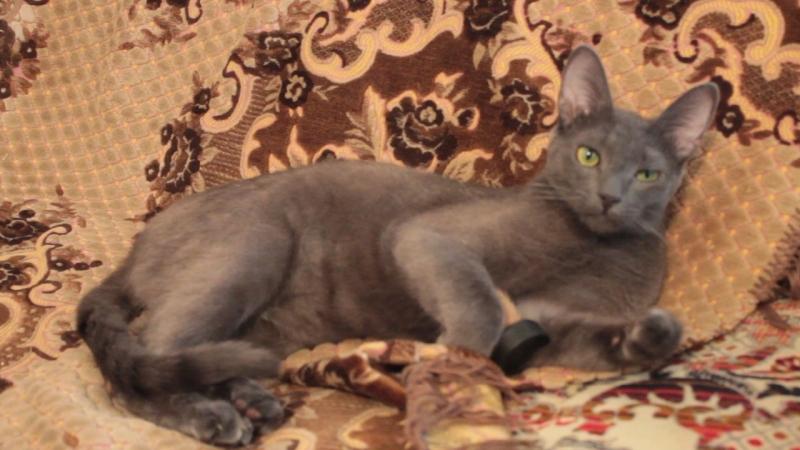 кошка играет ,кот прикол , Забавные животные видео 27