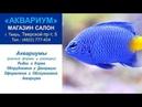Магазин АКВАРИУМ (аквариумы, рыбки, корма) - г. Тверь, Тверской пр-т, 5 - Тел.: (4822) 777-404
