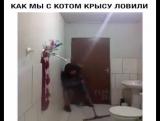 Подтверждаю - Страшнее крысы зверя нет! :))))