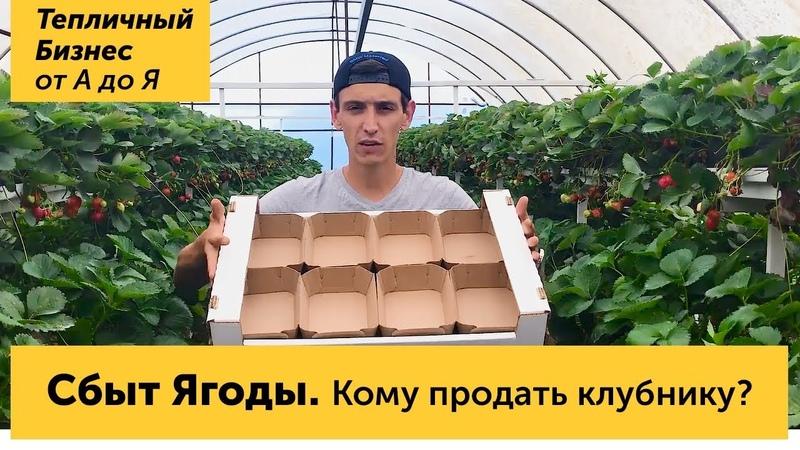 Сбыт ягоды Кому и куда продать урожай клубники оптовики и розница Лукошки и картонная тара