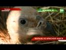 В Казанском зооботсаду пополнение у пары белоголовых сипов появился птенец ТНВ