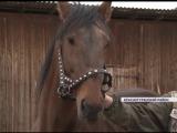 Лошади конезаводчиков из Краснотуранского района взяли призовые места на престижных скачках