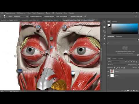 Photoshop tutorial Copy Past by Greves