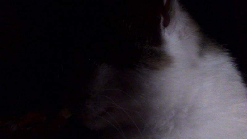 Кошка тарахтит