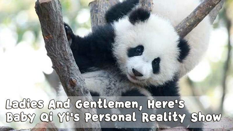 Ladies and Gentlemen, Here's Baby Qi Yi's Personal Reality Show | iPanda