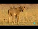 Grandes documentales - Cazadores de África Lazos de sangre