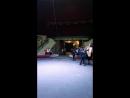цирк 11.2017
