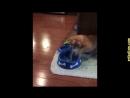 Приколы с кошками и котами 4 Подборка смешных и интересных видео с котиками и к если понравилось видео прошу вас ставить лайк
