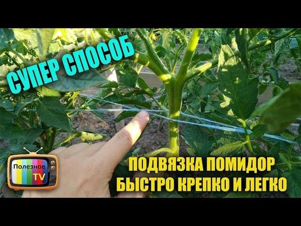 ПОДВЯЗКА ПОМИДОР БЫСТРО КРЕПКО И ЛЕГКО СУПЕР СПОСОБ