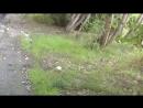 Мурманские спасатели ловили в кустах игуану Видео Вечерний Мурманск