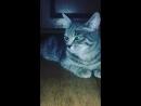Мой котик Яша