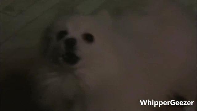 GABE THE DOG - Levels Avicii coub