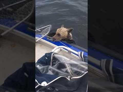 Медведь в лодке!!Мишка отдыхает. Рыбалка. Камчатка. Спасли медвежонка